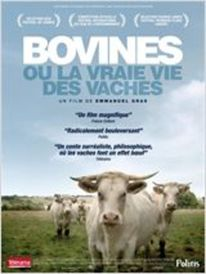 Dashboard_bovines